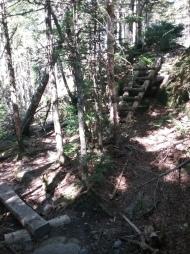 Climbing & ladders